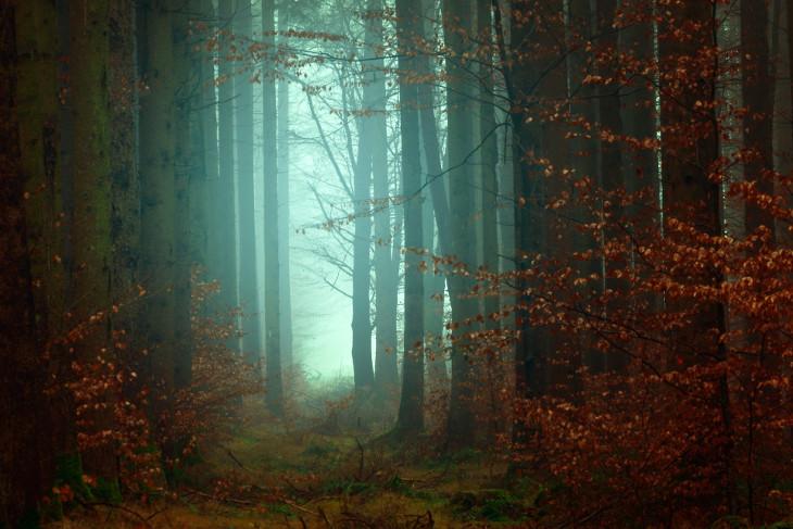 Forêt de Johannes Plenio