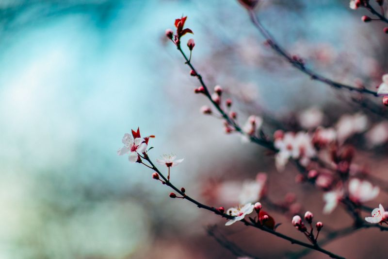 Fleur de fruitier de Nitish Meena