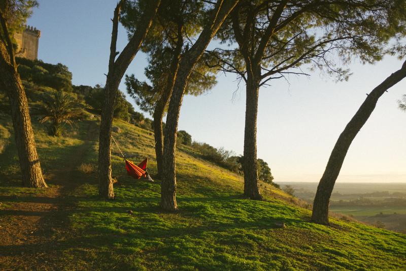 Tobias Tullius - Portugal trees